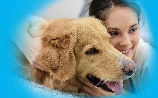 assurance chien finaref