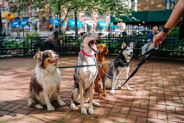 assurance chien de chasse carrefour