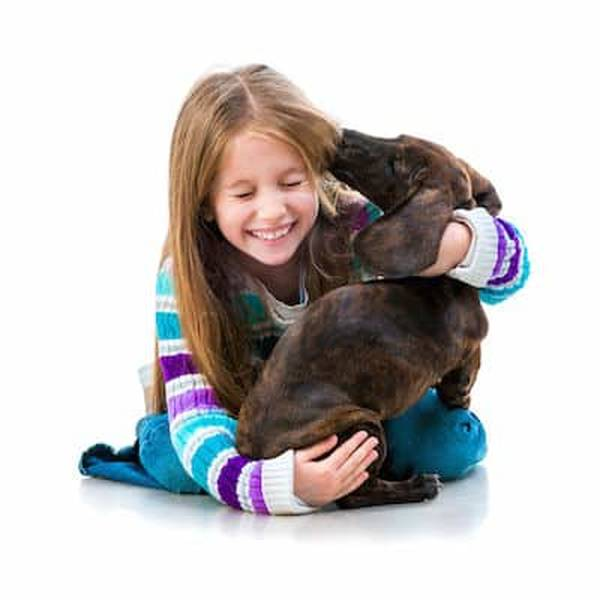 declarer chien assurance habitation