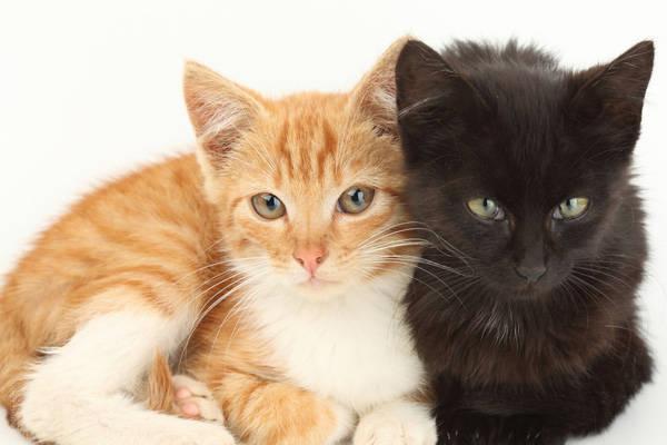 ag2r assurance animaux feuille de soins