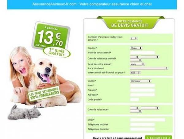 assurance chat en ligne